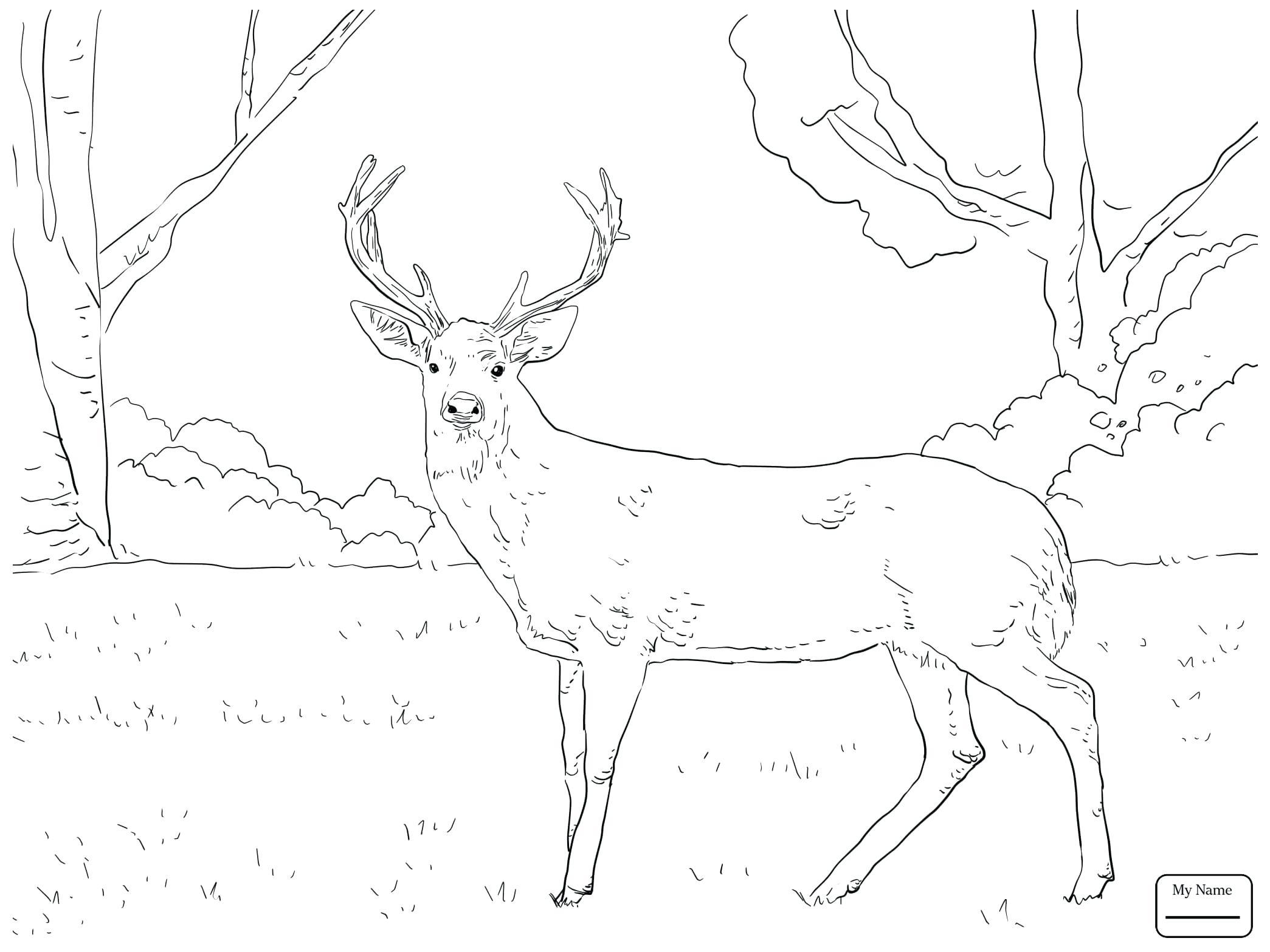 2089x1567 Deer Coloring Pages John Deere Gator Free Coyote Page Christmas