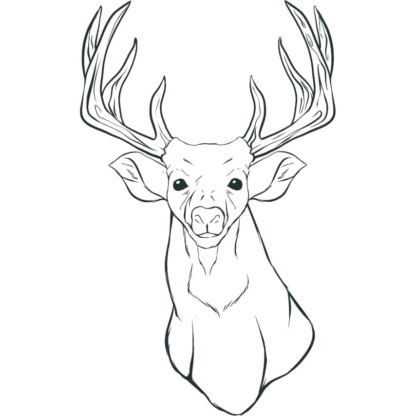 854x854 Deer Coloring Pages Pingyume Deer Coloring Pages Whitetail Deer