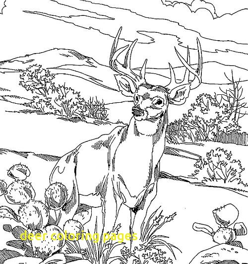500x532 Deer Coloring Pages With Whitetail Deer Coloring Pages O Whitetail