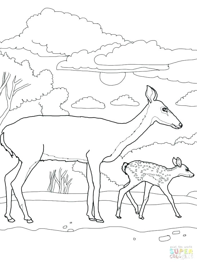 687x916 Deer Hunting Coloring Pages Coloring Pages Deer Whitetail Deer