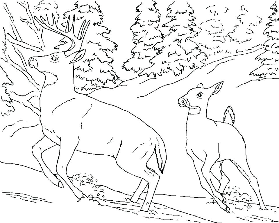960x768 Coloring Pages For Adults Only Whitetail Deer Running Elk Wildlife