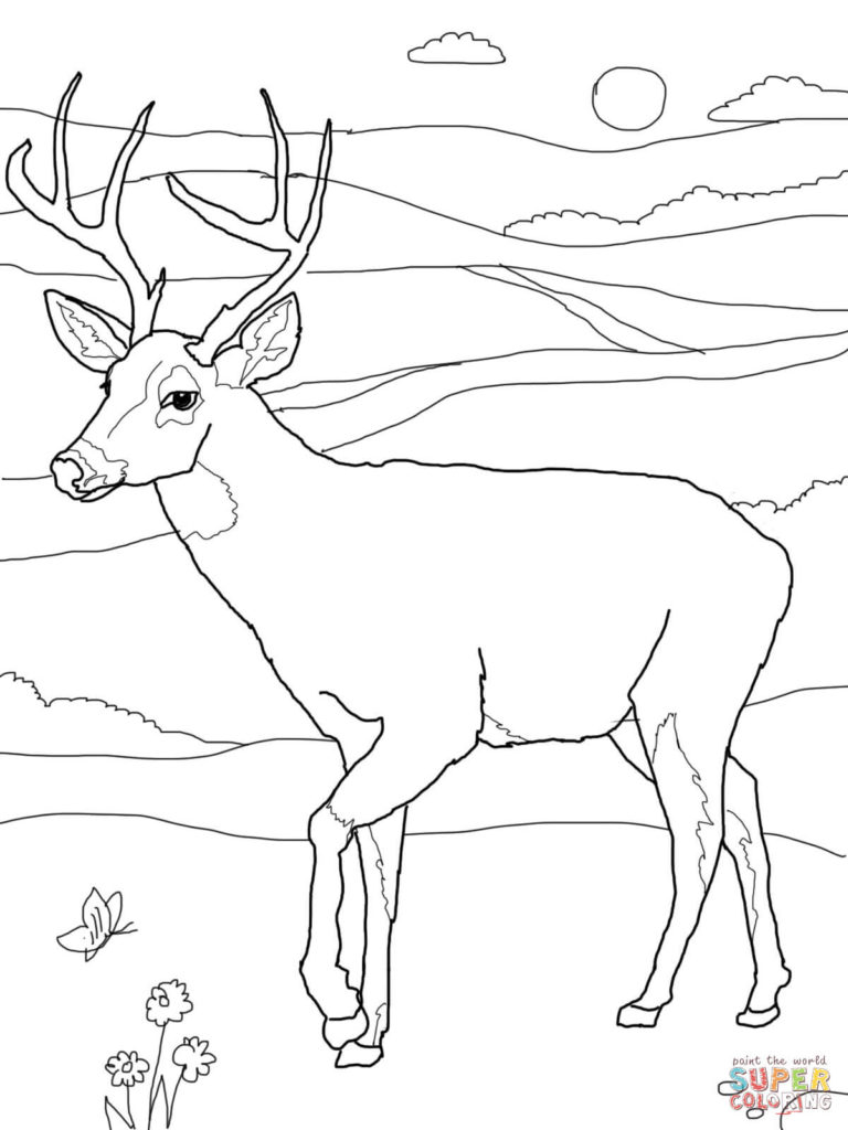 768x1024 White Tail Deer Coloring Page Free Printable Pages Throughout
