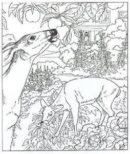 254x300 White Tailed Deer Coloring Pages