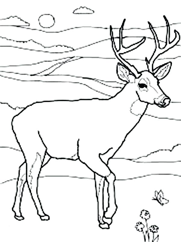 600x801 White Tailed Deer Coloring Pages Printable Coloring