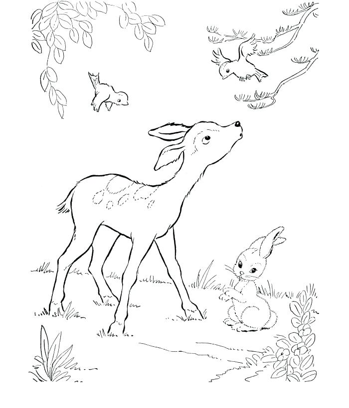 700x820 Whitetail Deer Coloring Pages Baby Deer Coloring Page White Tailed