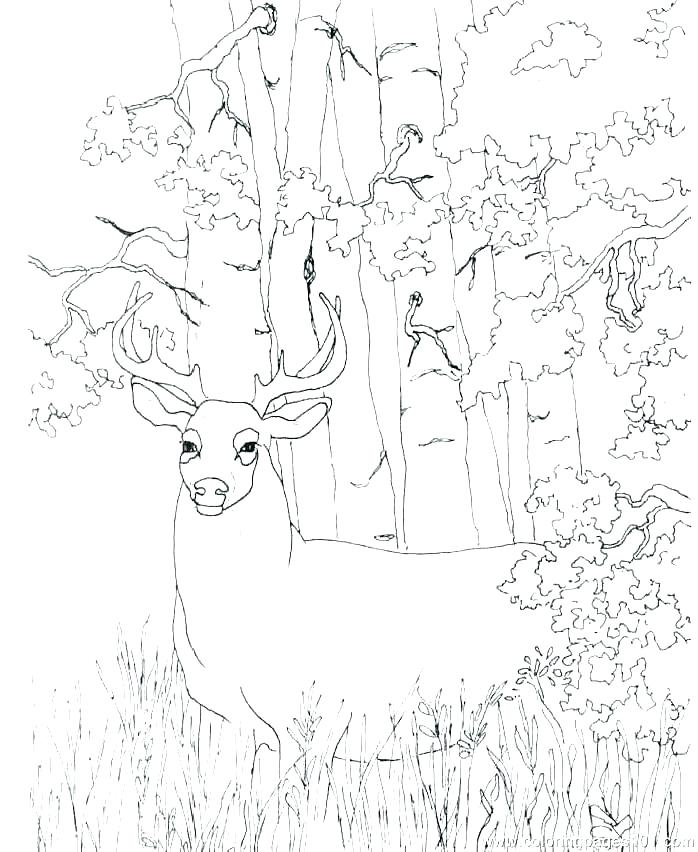 698x852 Whitetail Deer Coloring Pages Deer Hunting Coloring Pages Deer
