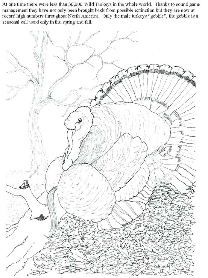 695x926 Whitetail Deer Coloring Pages Whitetail Deer Coloring Page White