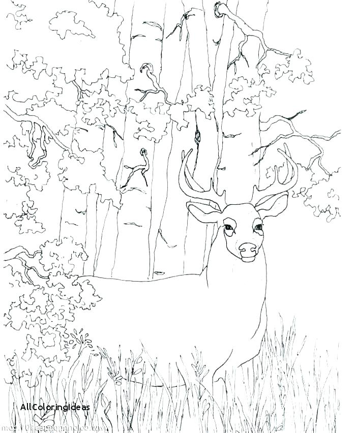 698x852 Coloring Printable Pages Free Deer Coloring Pages Whitetail Deer