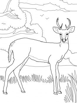 262x350 Whitetail Deer Printable Wildlife Coloring Books