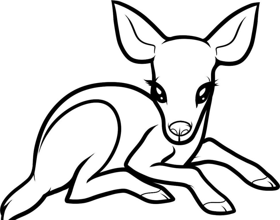 975x768 Deer Coloring Page Pages Whitetail Printable For Kids Free Online