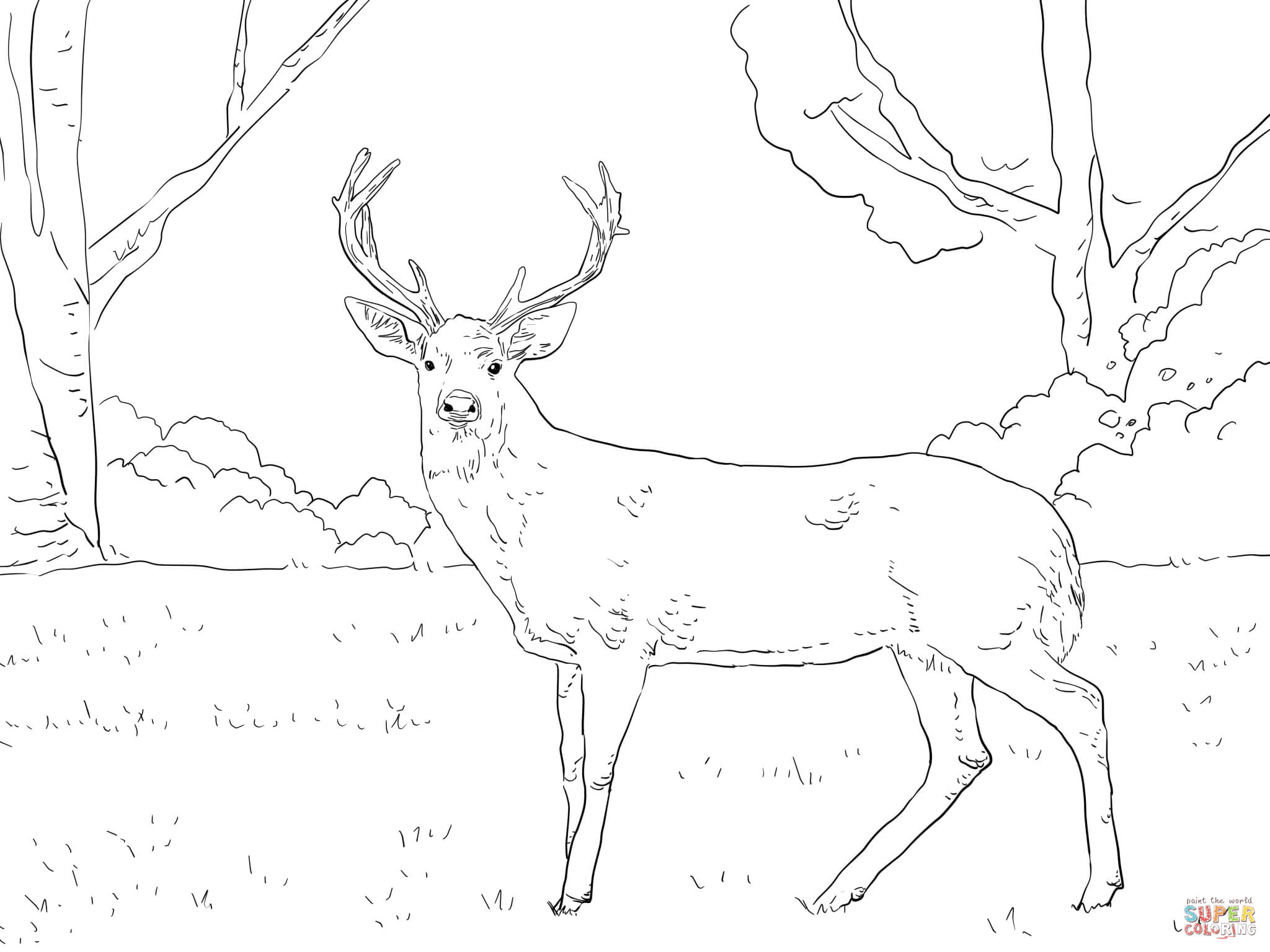 2048x1536 Deer Coloring Pages