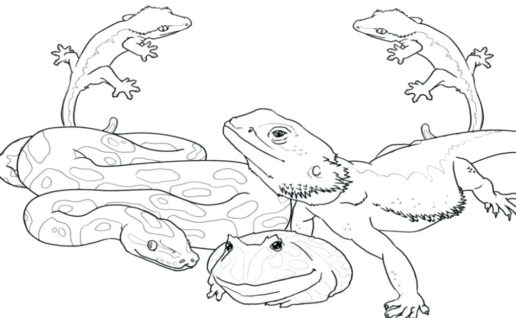 1024x631 Reptile Coloring Pages Free Amphibians And Reptiles Coloring Pages