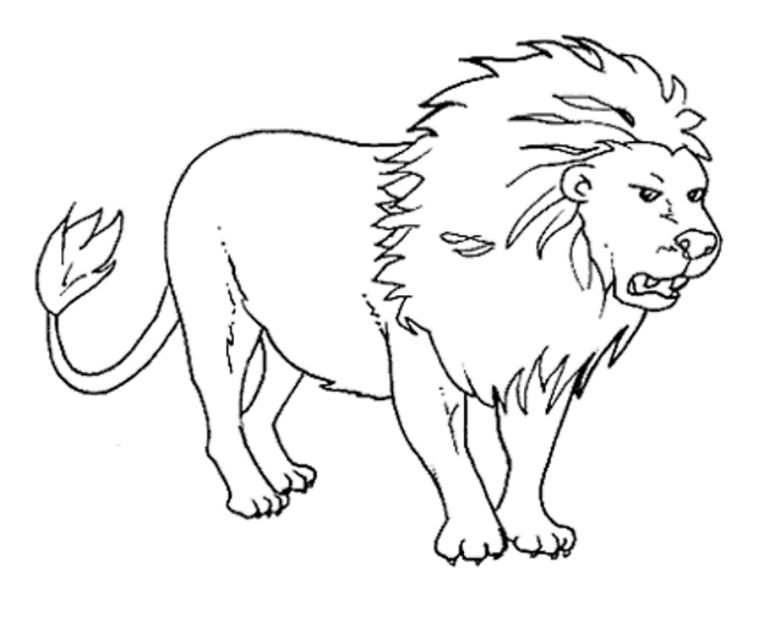 856x677 Wild Animal Coloring Pages For Adults Coloring Page Zone