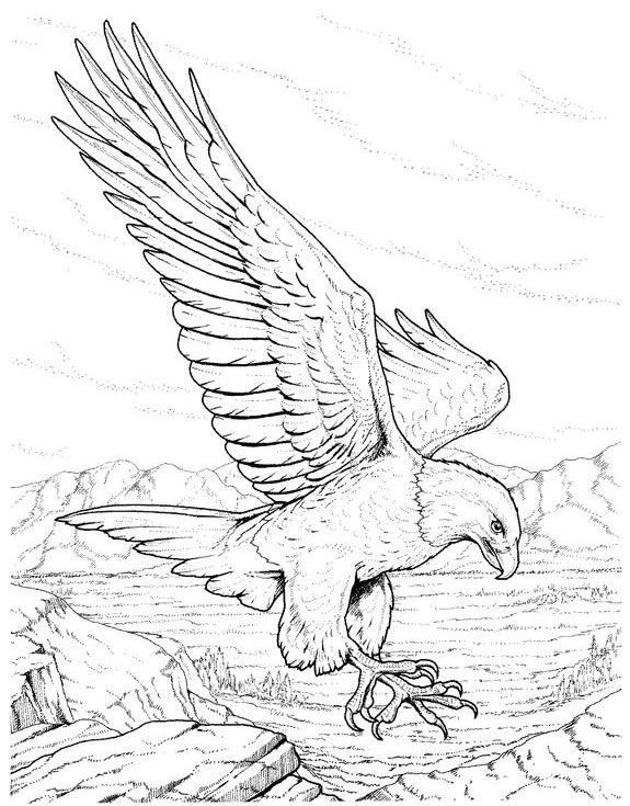 Bird Coloring Pages For Kids at GetDrawings.com | Free for personal ...