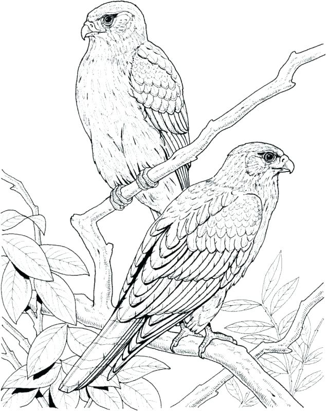 634x800 Coloring Page Bird Coloring Pages Of Birds Printable Valentines