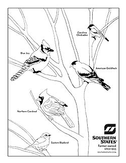 250x324 How To Teach Your Kids About Wild Birds On Coloring Pages State