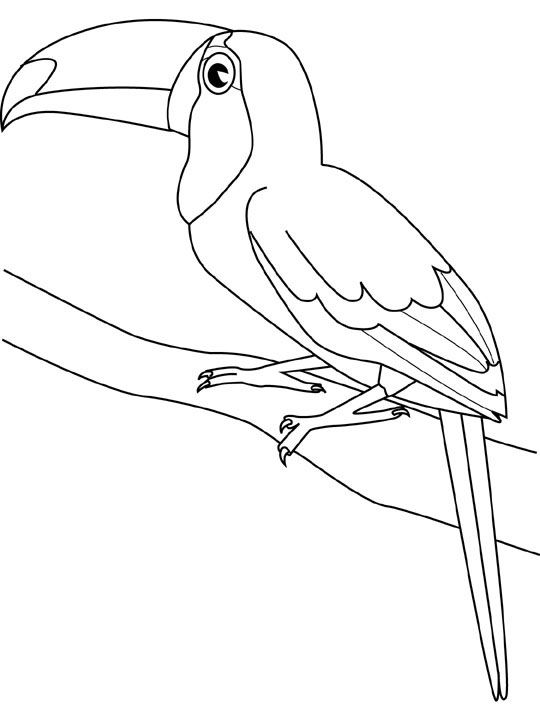 540x720 Amazing Tropicbird Animal Coloring Pages Bird Coloring Page Parrot
