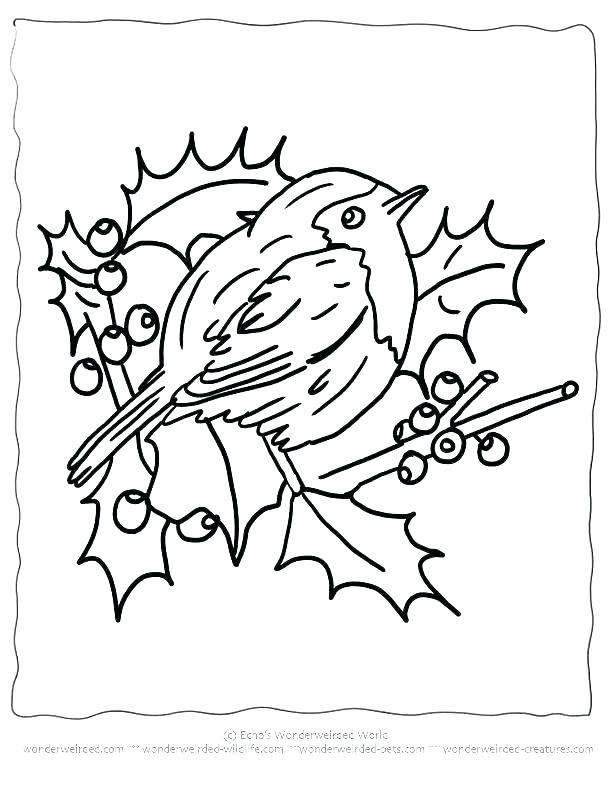 612x792 Robin Bird Coloring Pages Bird Printable Coloring Pages Coloring