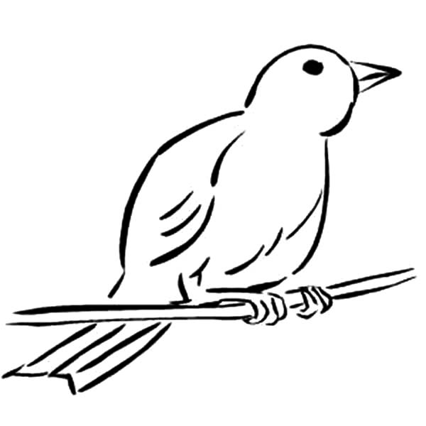 600x600 Wild Canary Bird Coloring Pages Wild Canary Bird Coloring Pages