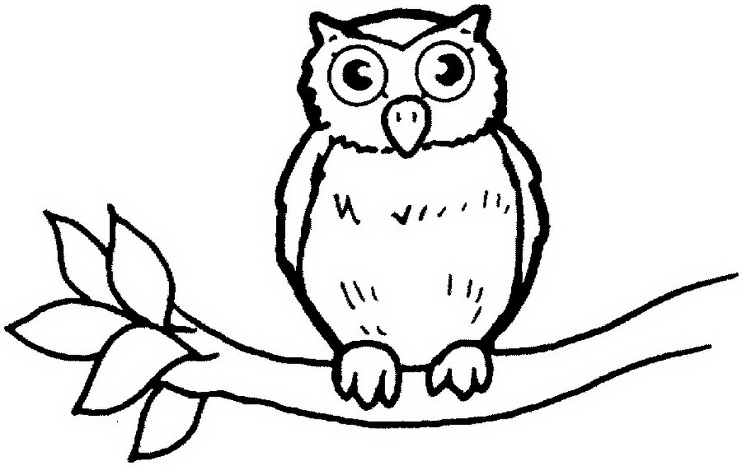 1048x659 Wild Animal Owl Bird Coloring Books Print Coloring Pages
