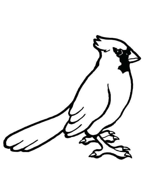 600x800 Cardinal Bird Coloring Page Printable Printable Coloring Cardinal