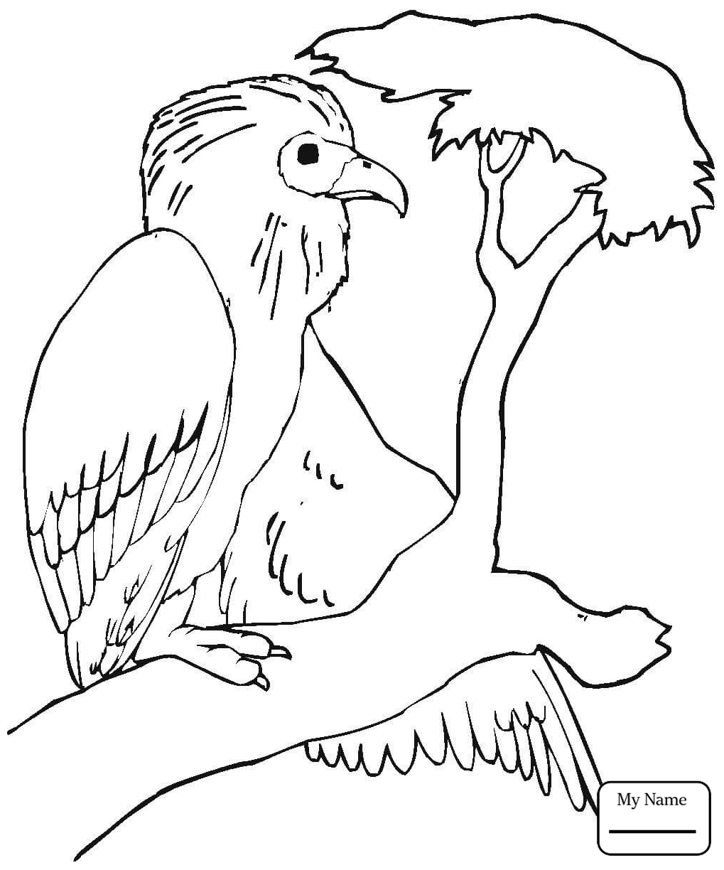 1019x1224 Cartoon Vulture Coloring Page Vector Illustration Free To Print
