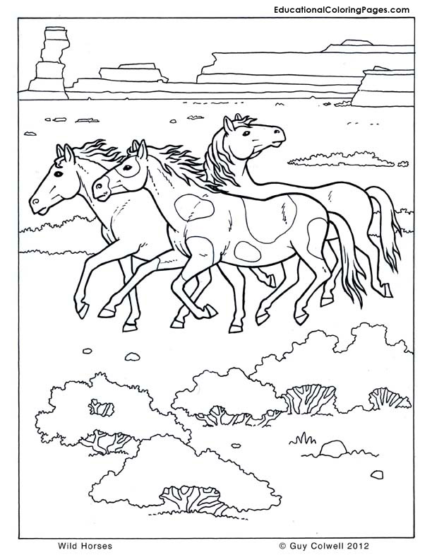 612x792 Wild Horses Coloring Pages