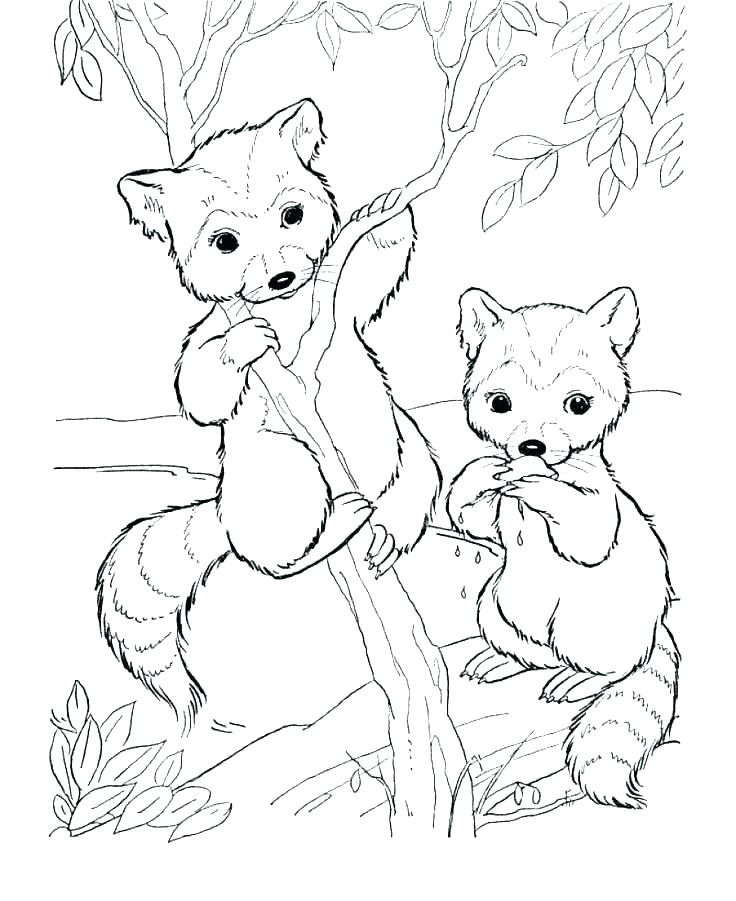 736x901 Wild Kratts Coloring Pages To Print Wild Coloring Pages Black