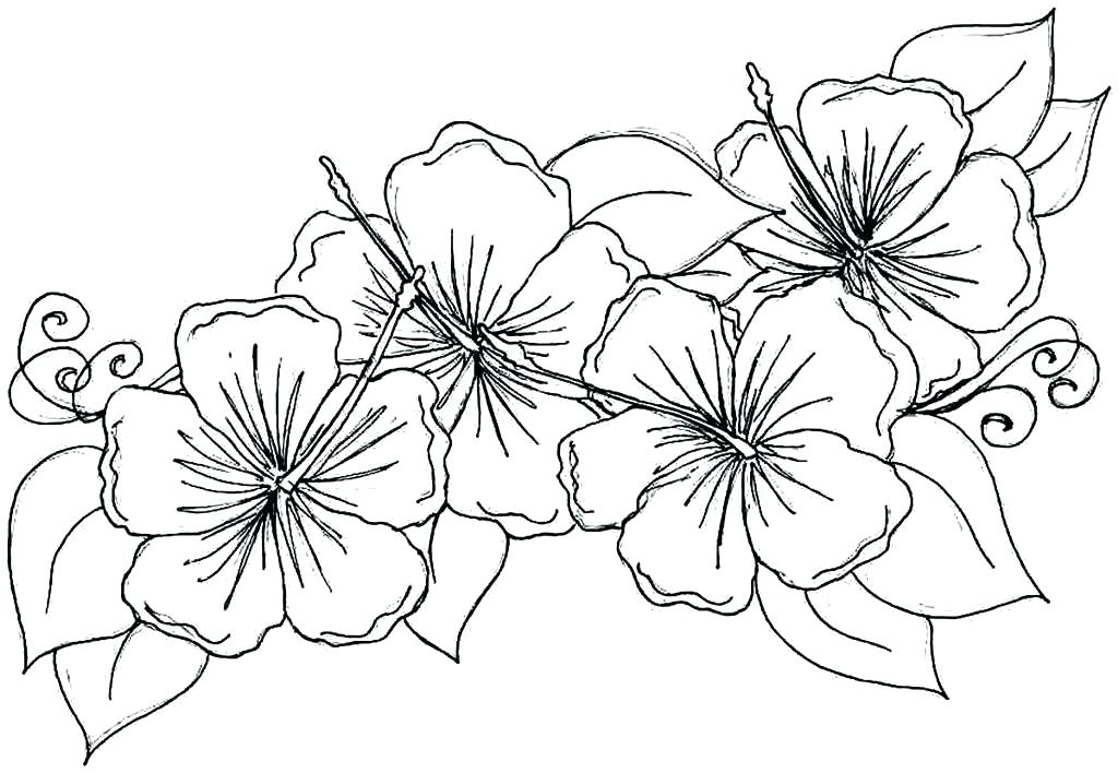 1024x708 Wildflower Coloring Pages Flower Celebrating Wildflowers Coloring