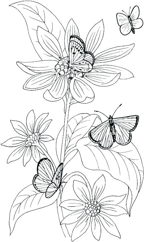 Wild Flower Coloring Pages at GetDrawings   Free download