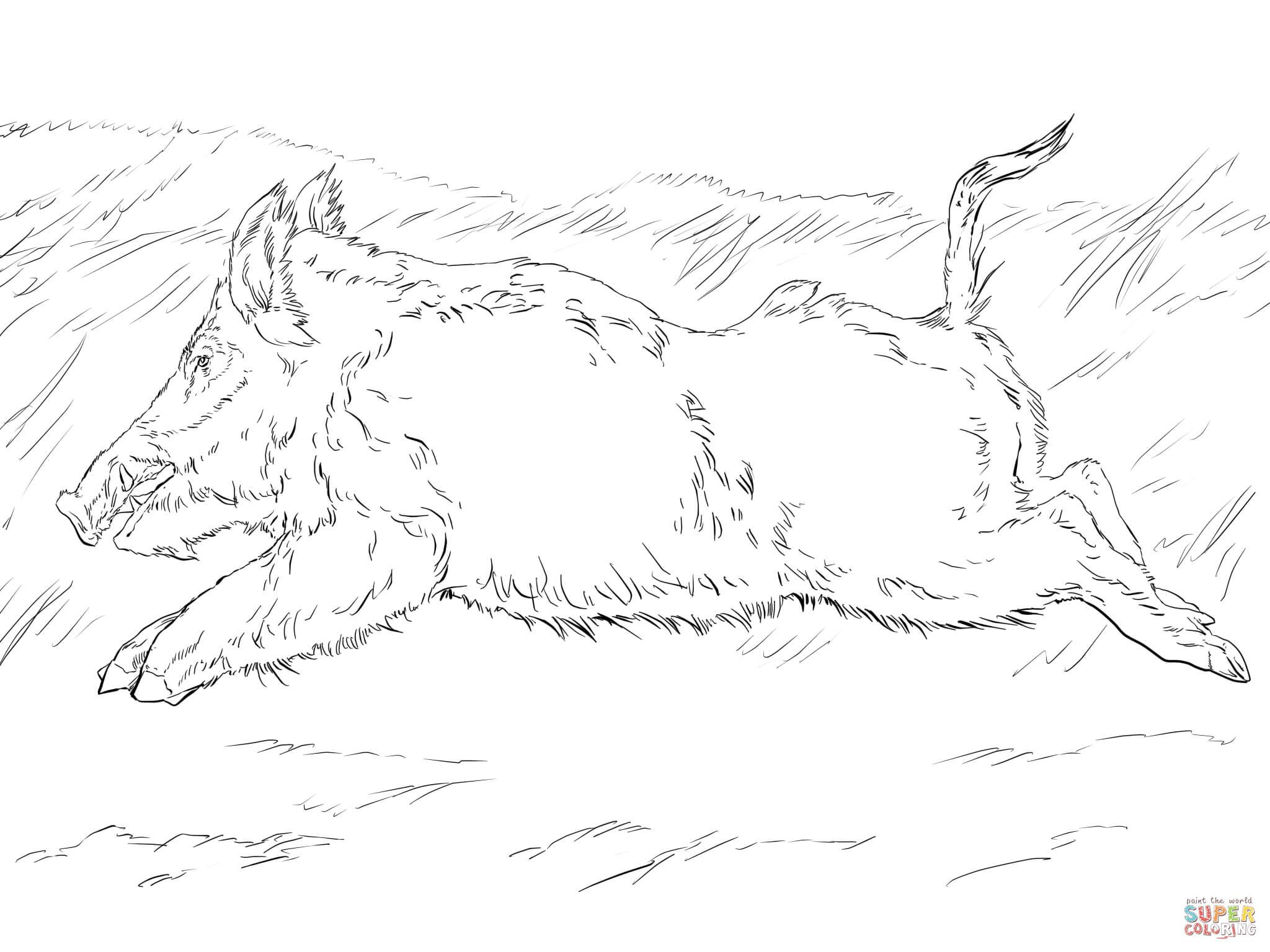 2048x1536 Running Wild Boar Coloring Page Free Printable Coloring Pages