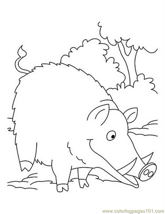 567x733 Wild Boar Eating Coloring Page