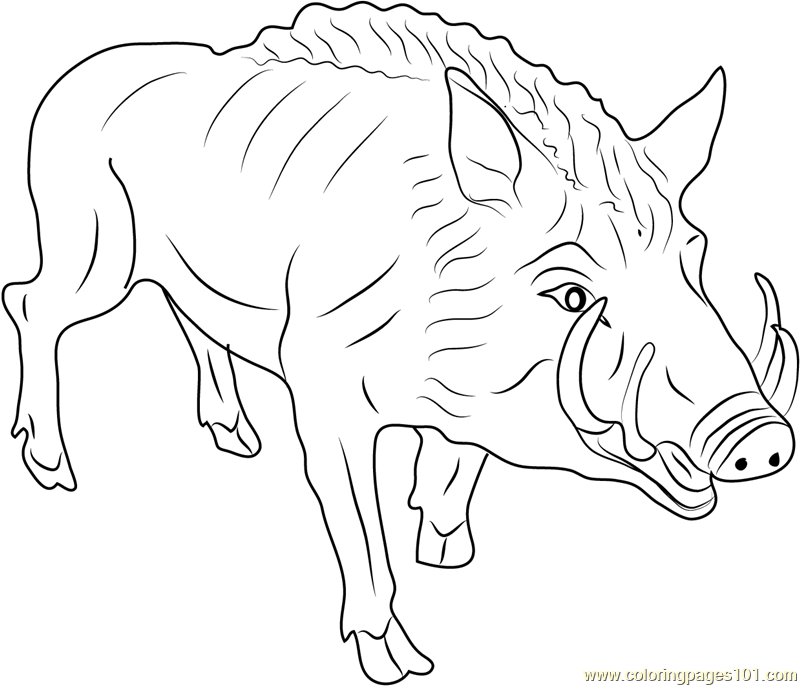 800x686 Eurasian Wild Pig Coloring Page