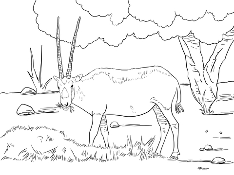 480x360 Realistic Arabian Oryx With Long Horn And Tree Coloring Page