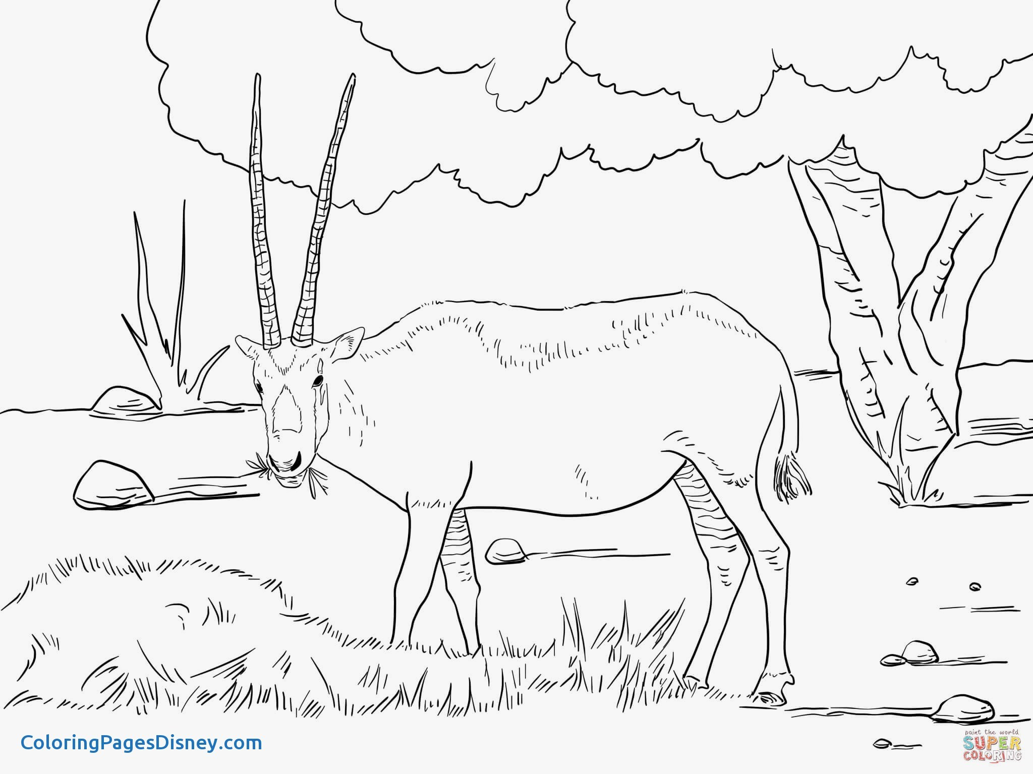 2048x1535 Wildebeest Coloring Pages Unique Realistic Arabian Oryx Coloring
