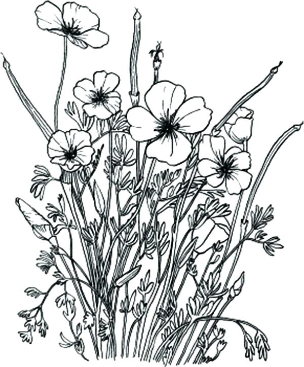 Wildflower Coloring Pages At Getdrawings Free Download