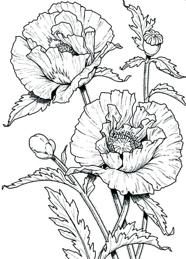 600x835 Wildflower Coloring Pages Celebrating Wildflowers Coloring Book