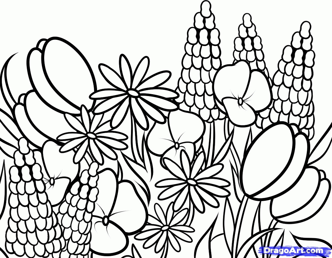 Wildflower Coloring Pages at GetDrawings | Free download