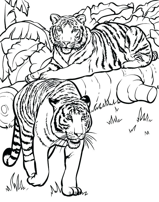 662x842 Wildlife Coloring Pages Animal Coloring Pages Printable Free