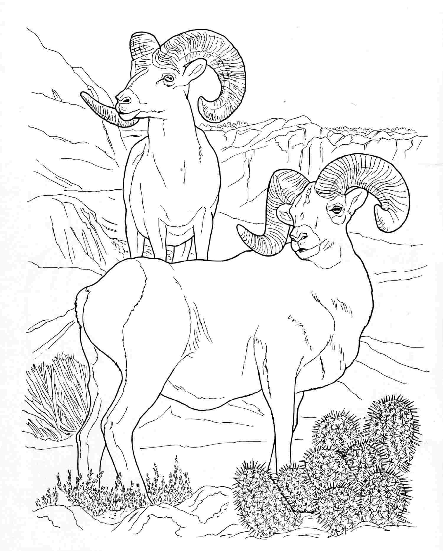 1500x1868 Wildlife Coloring Pages Nice Wildlife Coloring Books