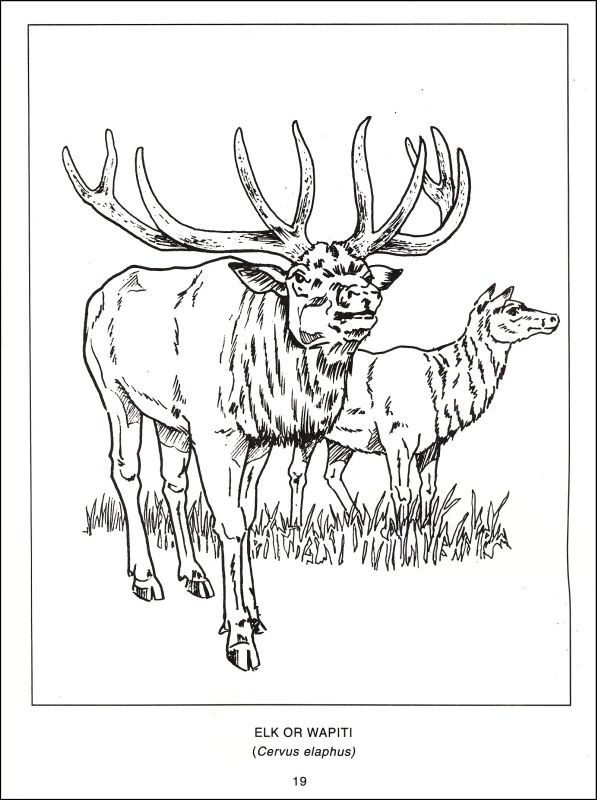 597x800 Wildlife Coloring Pages Unique Wildlife Coloring Book