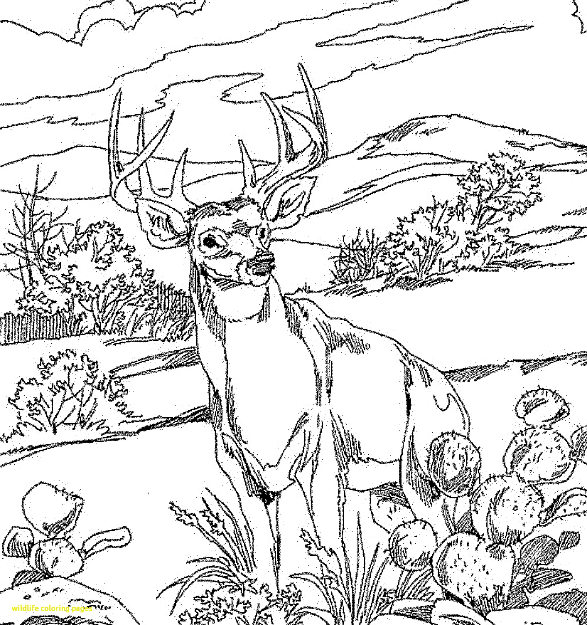 2000x2128 Wildlife Coloring Pages With Free Wildlife Coloring Books