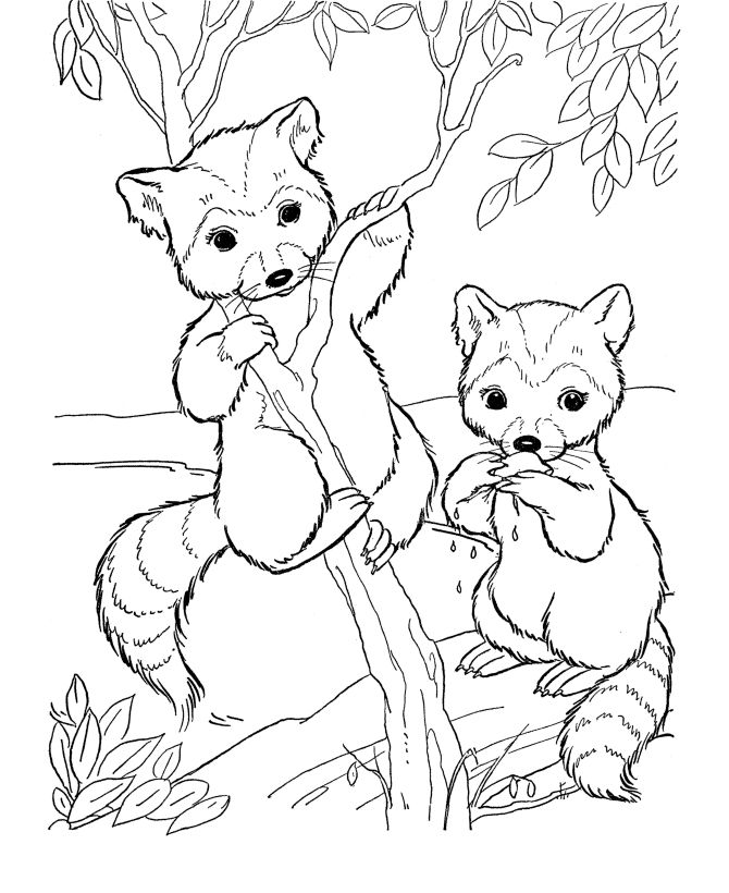 Wildlife Coloring Pages For Adults