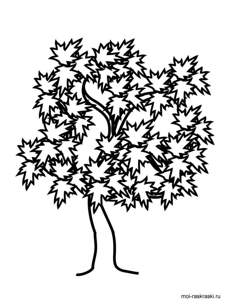 Willow Tree Coloring Page