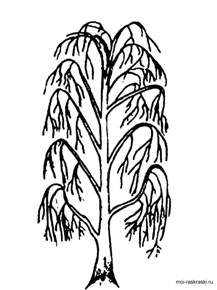 750x1000 Tree Trunk Coloring Page Coloring Pages Trees Coloring Pages