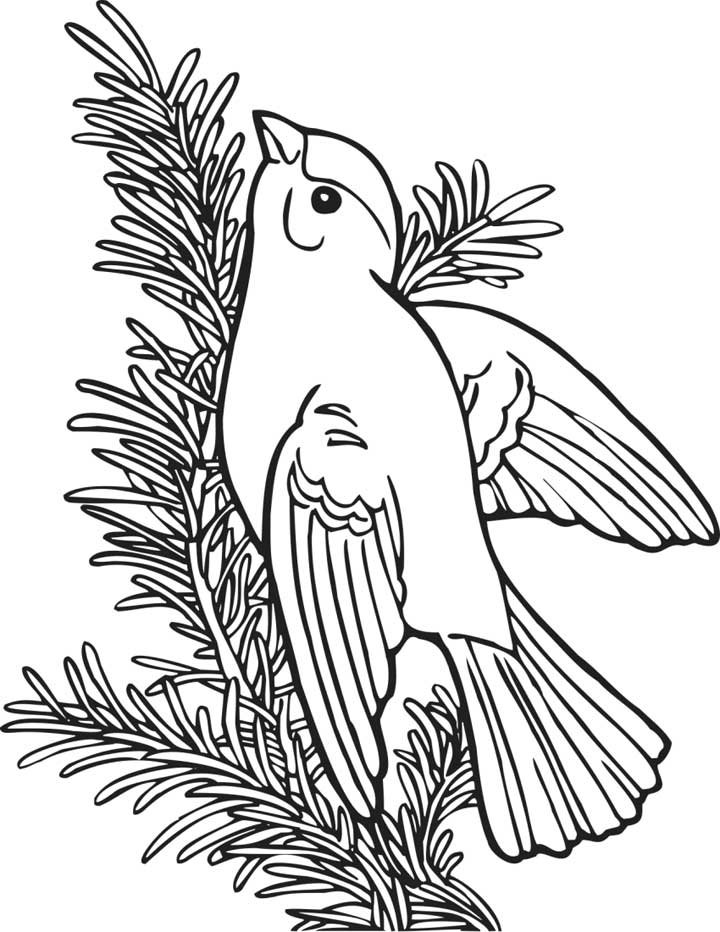 720x932 Willow Gold Finch Coloring Page For Kids