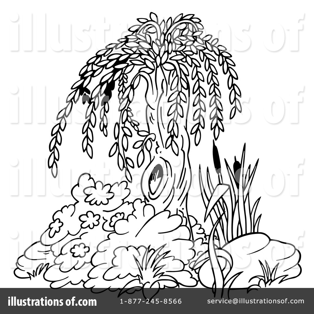 1024x1024 Willow Tree Clipart