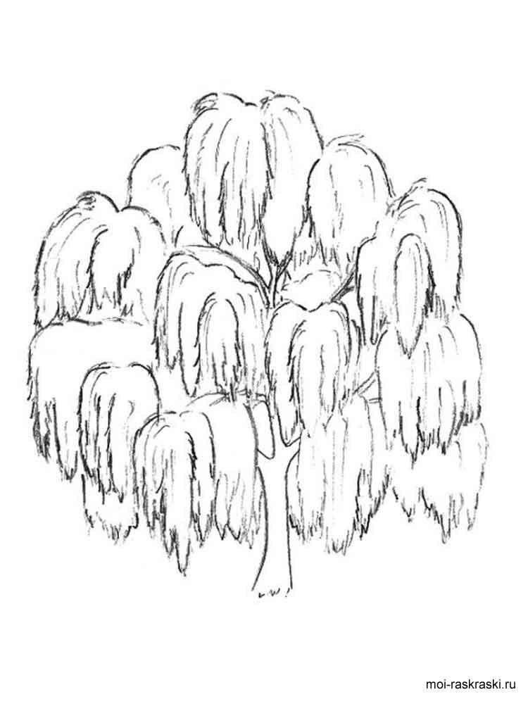 750x1000 Willow Tree Coloring Page Simple Living Tree In The World Places