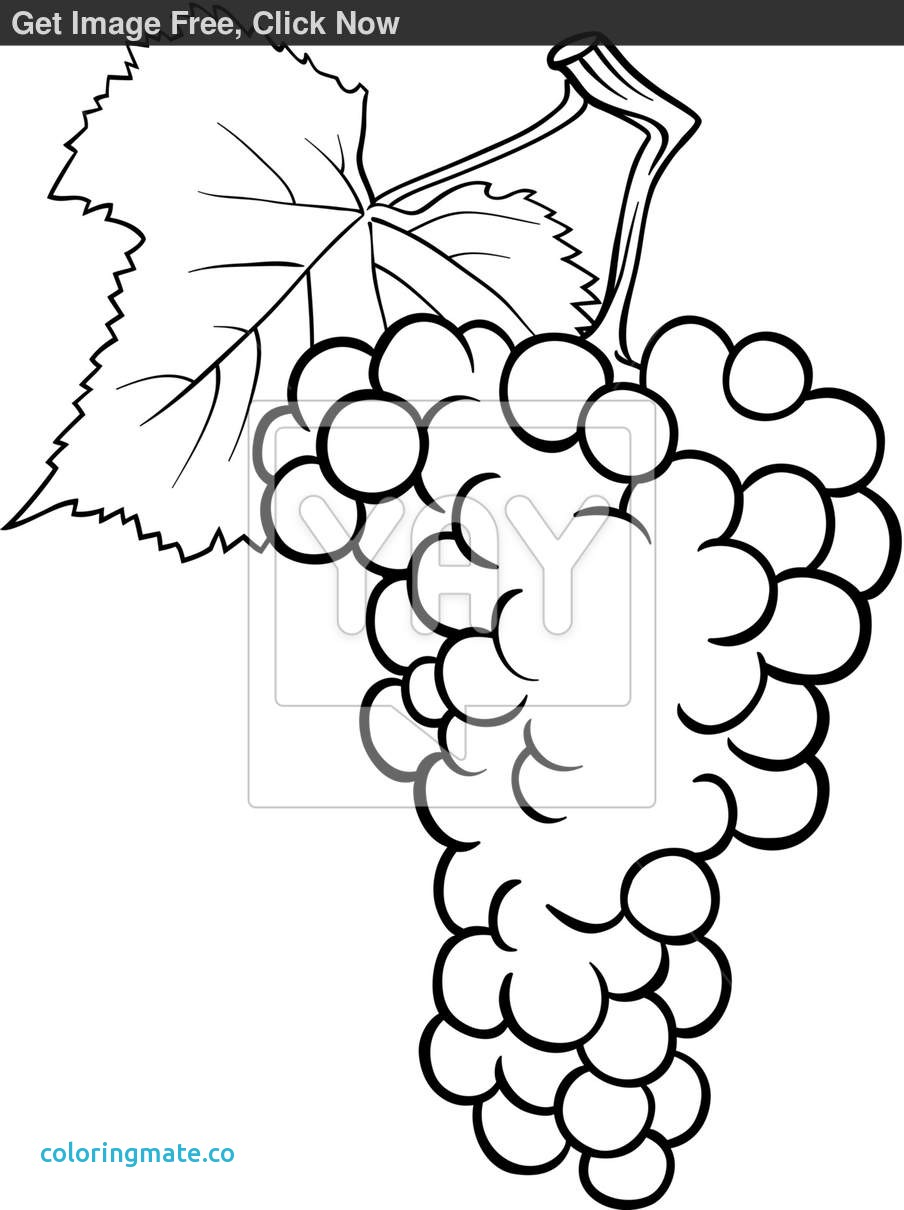 904x1210 Wine Bottle Coloring Pages Awesome Wine Bottle Coloring Page