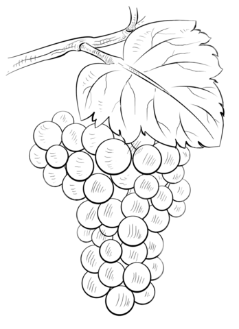 348x480 Brunch Of Grapes Coloring Page